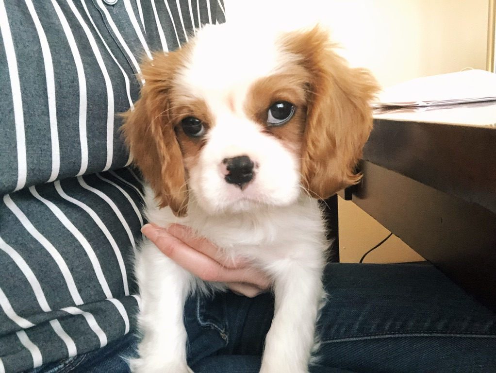 finding work-life balance with a puppy